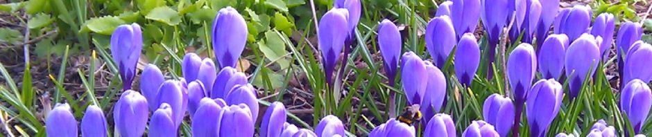 kevät mehilainen otsikko 2012 _IMAG4067